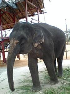 まだこどもの象さん